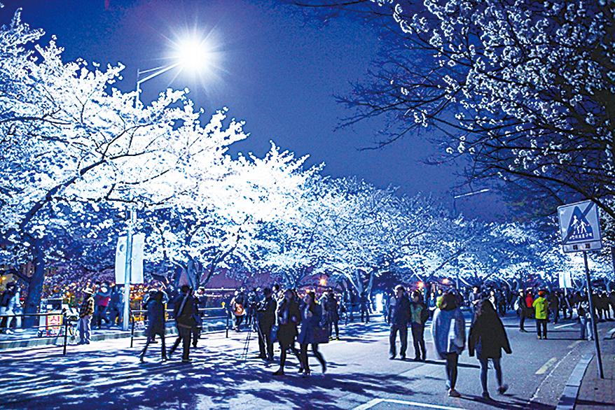 南韓春季賞花著名景點 一日遊首都圈賞花之旅