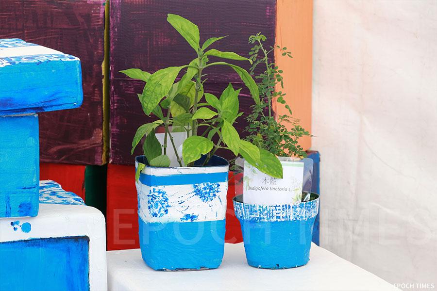 香港本地植物「木藍」可作為「藍染」原料。(陳仲明/大紀元)
