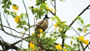 市區公園觀鳥