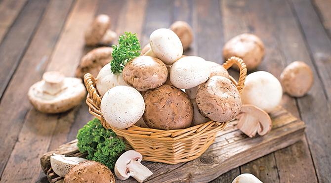 研究發現,每周食用超過300克蘑菇的老年人可能減少50%發生輕度認知障礙(MCI)的風險。(Fotolia)
