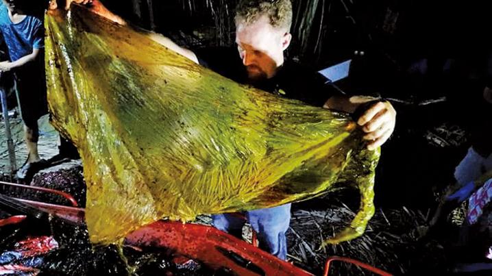 菲律賓南部城鎮Mabini有一條年輕鯨魚屍體沖上岸,解剖鯨屍後發現,其胃內有16個米袋、4個香蕉種植園袋子和多個購物用膠袋,共重約40公斤。(骨頭收藏博物館Facebook)