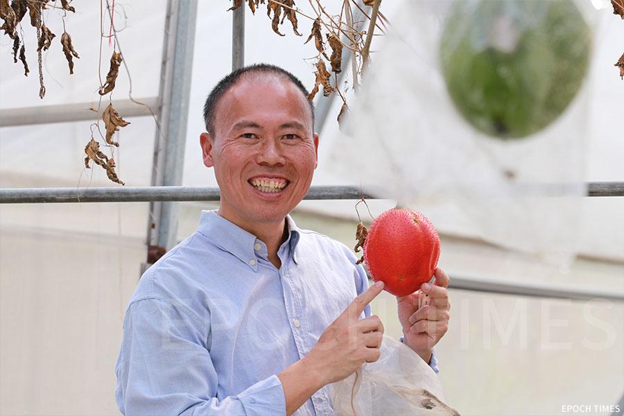 黃如榮喜歡進行種植實驗,圖為首次引進的天堂果。(陳仲明/大紀元)