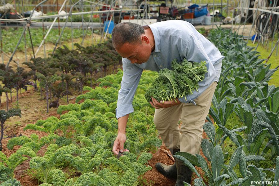 黃如榮希望人人都可食用放心蔬菜,得到健康的身心。(陳仲明/大紀元)