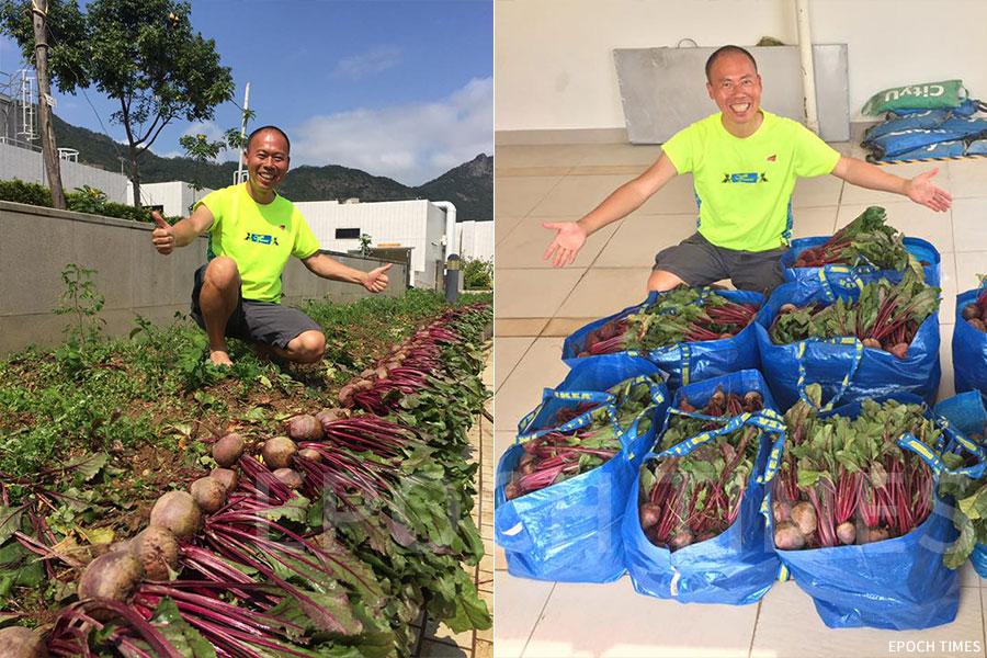 黃如榮在城市大學擔任「Grow」種植計劃種植導師,實踐「生產型天台農場」,今年二月剛剛收穫了一批茂盛的紅菜頭。(受訪者提供)