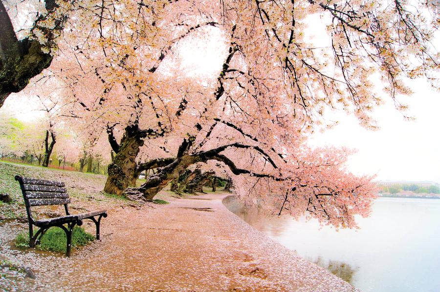放手,就有桃花源 讓人生像首詩