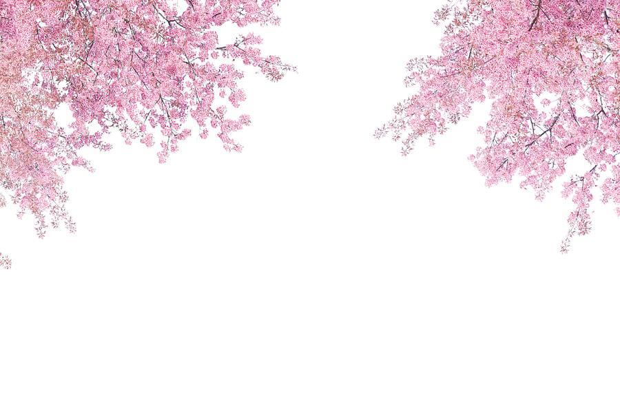 南韓春季著名賞花地各地推薦的人氣景點