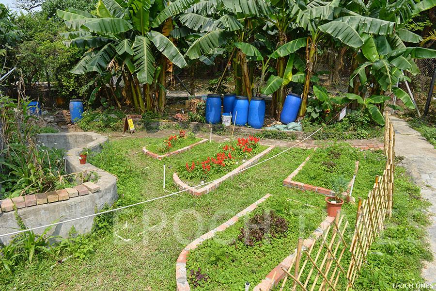 校舍右側設有「生態園」,種植不同的作物,供學生學習與體驗種植過程。(宋碧龍/大紀元)