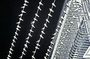 四川奇觀:逾萬隻燕齊列電線上過夜
