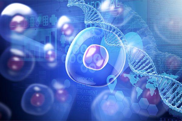 研究發現,成年人身體組織細胞內留存着它們從胚胎時期至今所有的生長信息。(Fotolia)