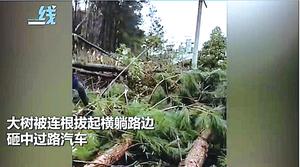 【圖片新聞】廣西柳州現十級大風 大樹連根拔屋頂掀翻
