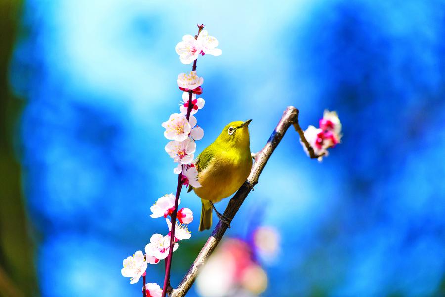 【花意詩心】桃李之花 粉紅香白未爭妍