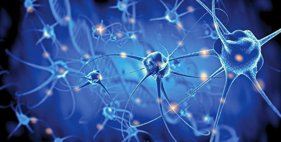 新研究:人類大腦神經元再生從未停止