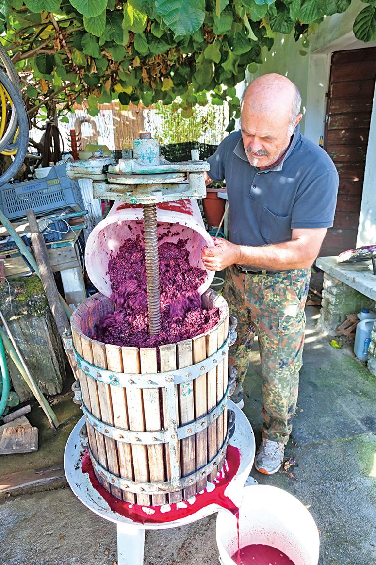 現代釀酒園的工作人員,正在處理葡萄。