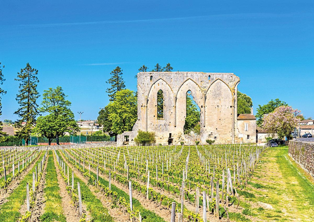 在歐洲,修道院旁常伴有葡萄園。