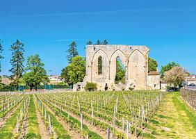 飲食文化 ---漫談葡萄酒的歷史