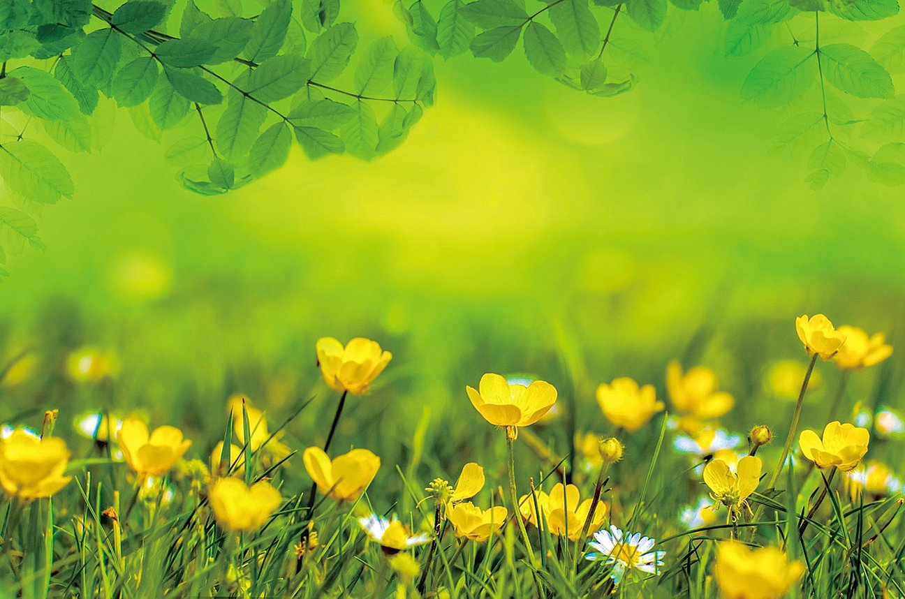 春天自身所獨有的生發之機,才有生命能量的盡情釋放及其昇華之後的萬紫千紅。(Pixabay)