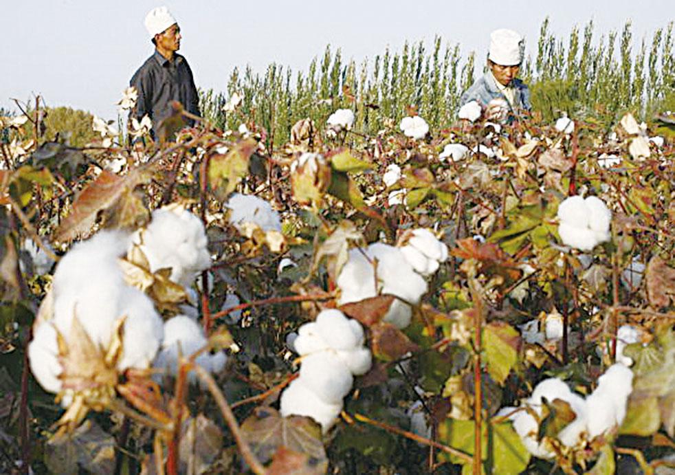 來自中國西部及內陸地區的臨時工人正在新疆庫爾勒的棉田裏採棉花。(FREDERIC J. BROWN /AFP/Getty Images )