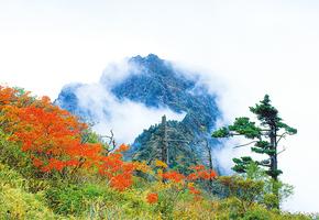 第四篇 大自然的饋贈 韓國咸陽郡山養蔘