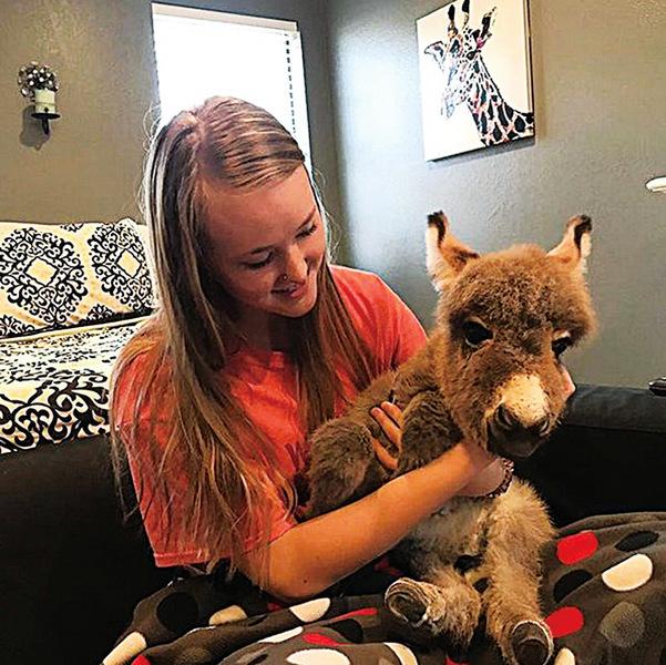 美國高三女生悉心照顧垂危小驢 意外找到人生意義