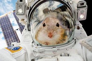 太空站小鼠瘋狂轉圈令科學家不解