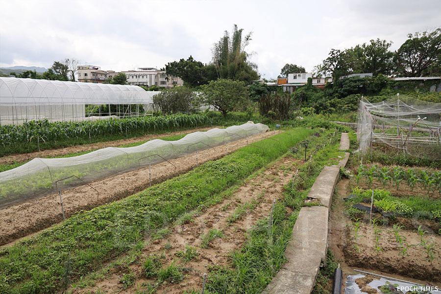 盧祖旭相信,有機農業在香港大有可為。(陳仲明/大紀元)