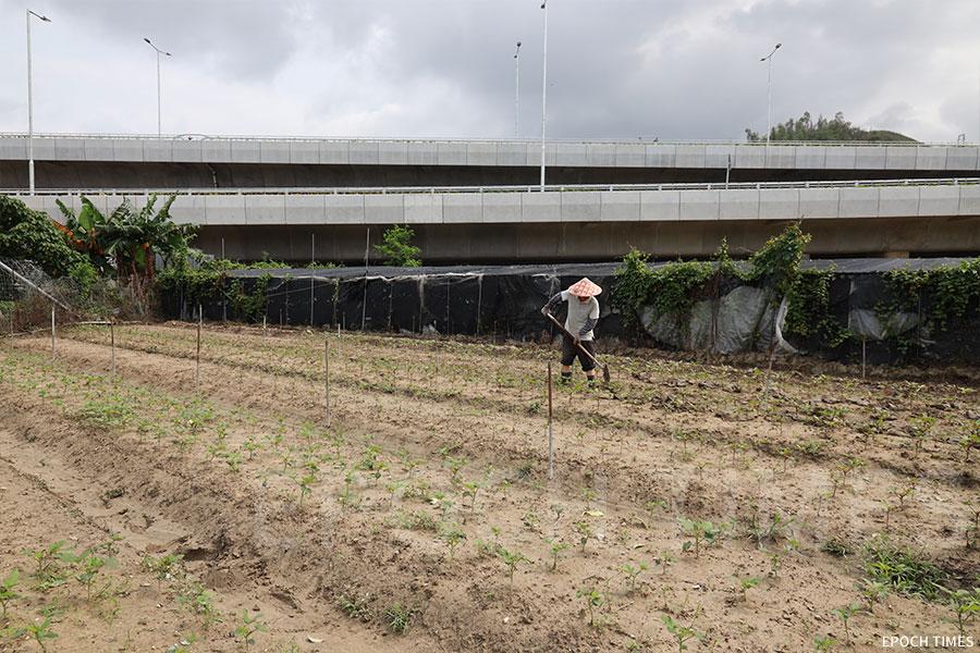 農場附近的蓮塘/香園圍口岸連接道路即將開通,或對農場生態造成影響。(陳仲明/大紀元)