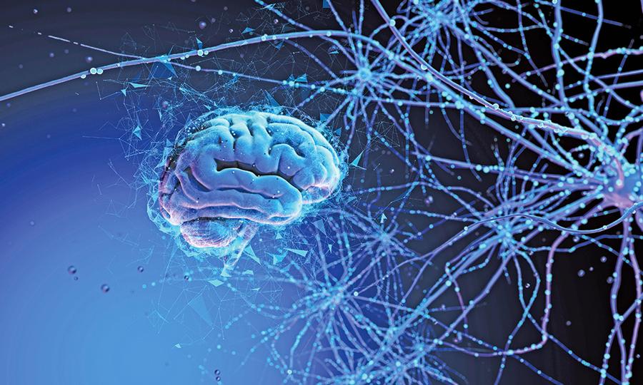新發現:運動神經元內外分工機制