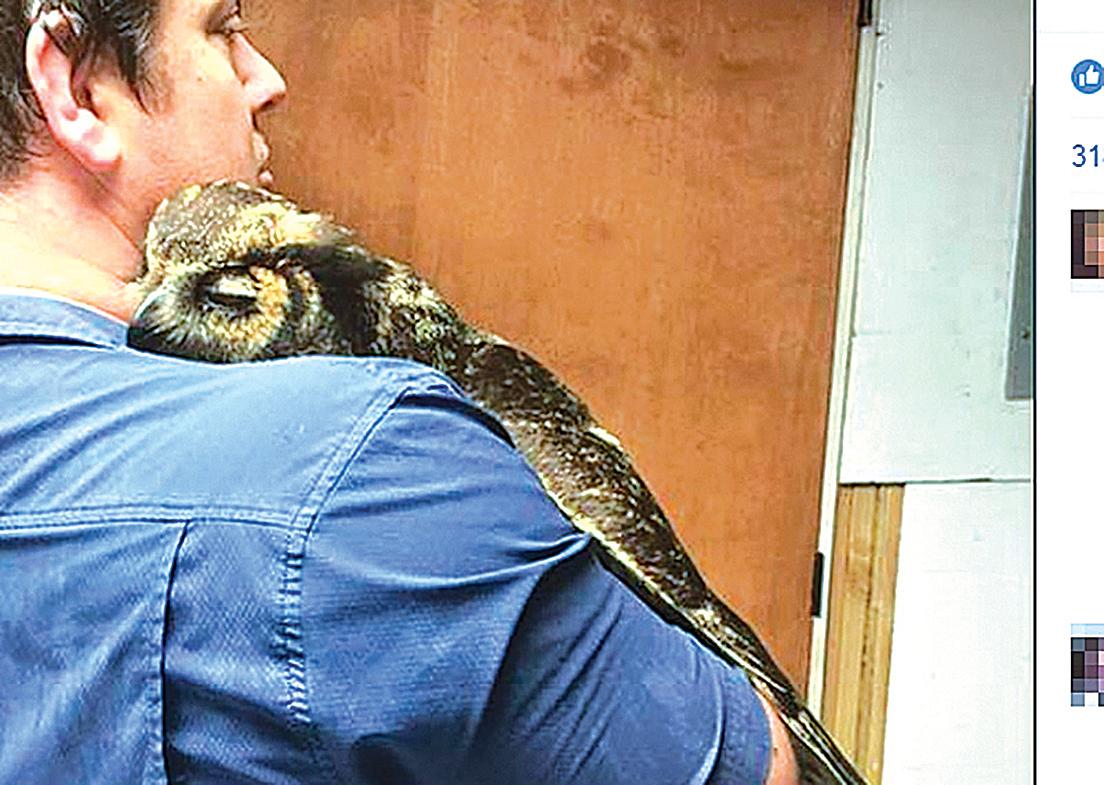 美洲大型貓頭鷹大鵰鴞女孩GiGi給了救命恩人波傑基一個「鷹式大擁抱」(Wild at Heart Rescue臉書)