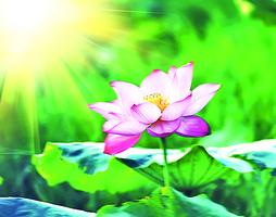 【心靈陽光】謙卑是美德