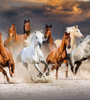 馬類遺傳大流失 疑養殖行為造成