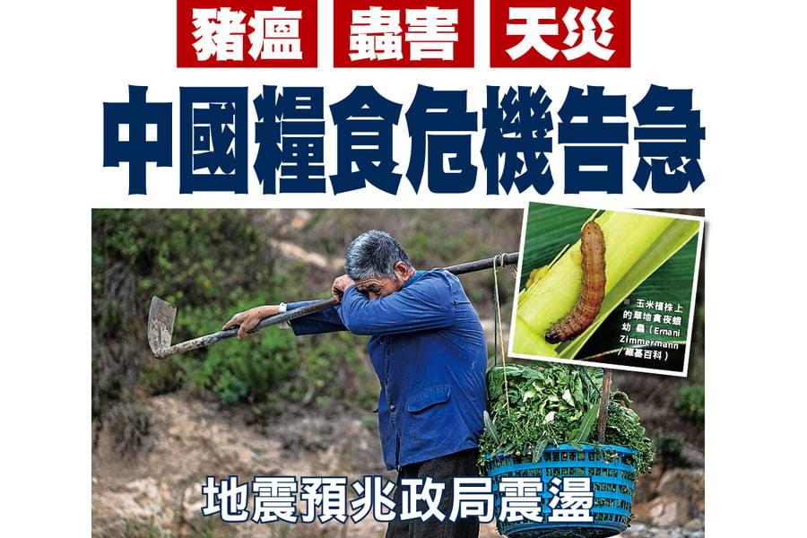 豬瘟 蟲害 天災 中國糧食危機告急