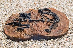 研究發現年幼恐龍用四肢行走