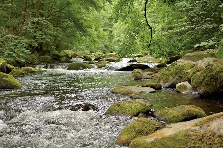 英國約克大學全球歷來最大型河流研究指出,在72國河流取得的711個樣本中,有近三分之二受檢河流遭受一種或多種常見的抗生素污染。(Pixabay)