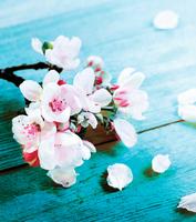 千百次回眸於春風裏