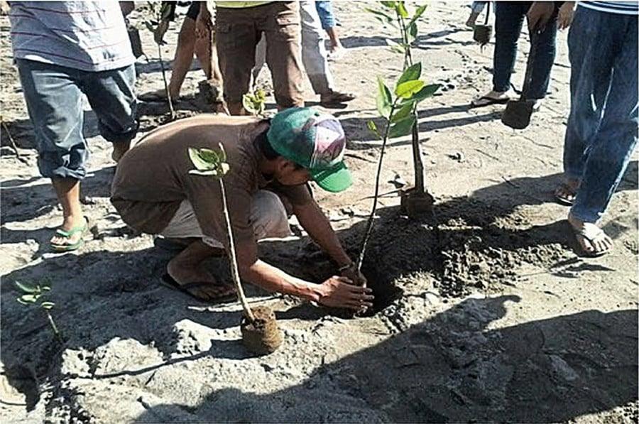 菲律賓新立法 學生要畢業 先種十棵樹