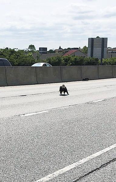 受傷白頭鷹被困高速路 電單車騎士相救感歎超乖