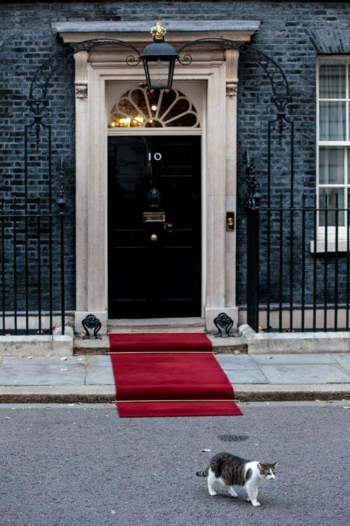 趁貴賓還沒到,淘氣的Larry總是喜歡先來走走紅地毯,找找感覺。(Jack Taylor/Getty Images)