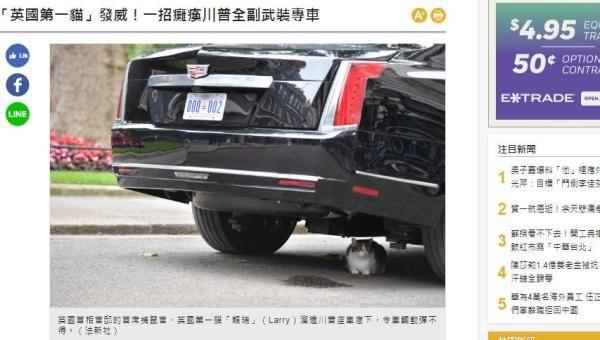 英國第一貓Larry偷偷溜到了特朗普座駕車底,爬在那裏不肯出來,令這輛全副武裝的專車動彈不得。(網頁截圖)