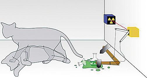 薛定諤之貓。(Dhatfield/Wikipedia Commons)