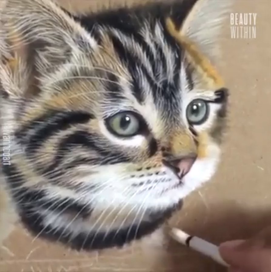 胡伊凡先在畫板打草稿。接著一筆一畫細細勾勒出貓咪的毛髮。(授權影片截圖)