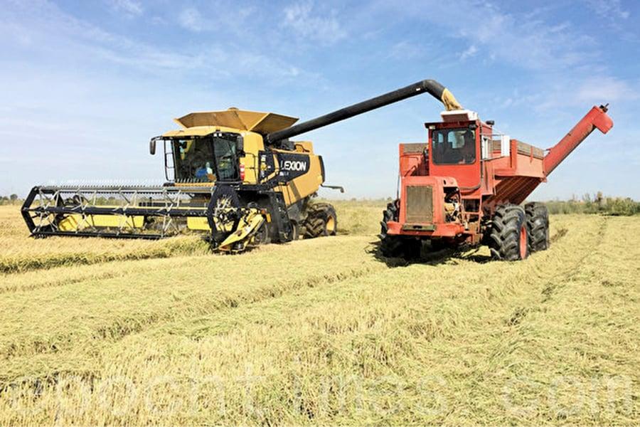 美國對中國首次出口稻米