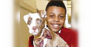 12歲男孩製作時尚領結 幫流浪動物找到有愛的家