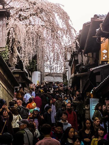 遊客猛增 日本京都在「歡喜中悲鳴」