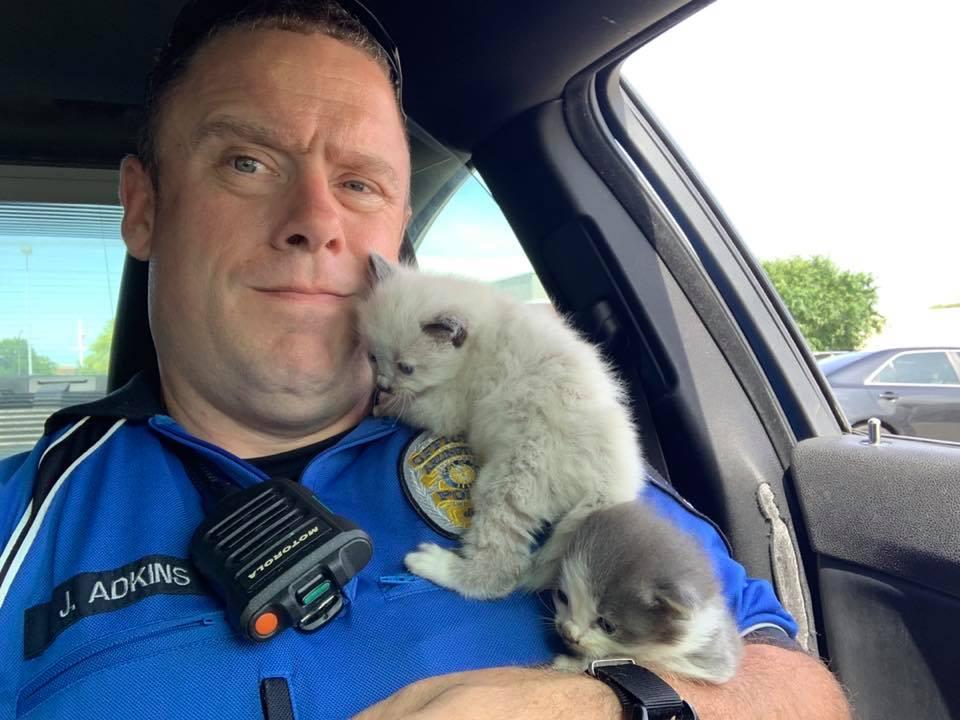 救出小貓後,牠們顯然也愛上了好心的警察,一隻緊緊靠在阿德金斯的頸窩,一隻乖乖待在他溫暖的臂彎裏。(courtesy of Arlington Police Department)