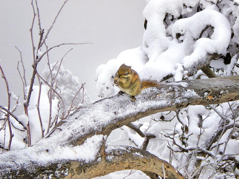城南的冷雪與松鼠