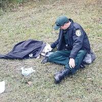 愛心警察車禍現場安慰受傷狗狗