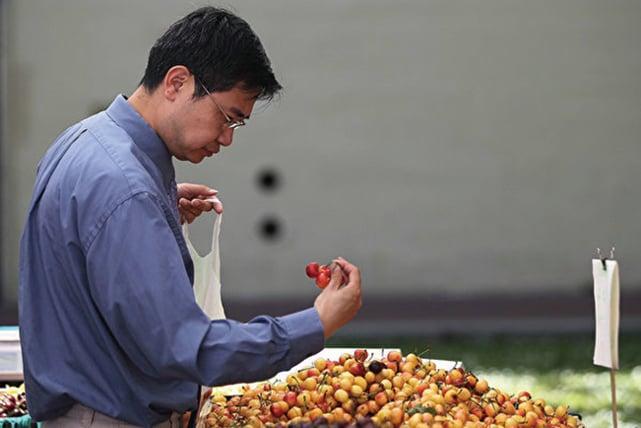才熟悉美國車厘子味道的中國胃不得不聽命於政治導向,美國車厘子已經成為貿易戰的犧牲品。 (Getty Images)