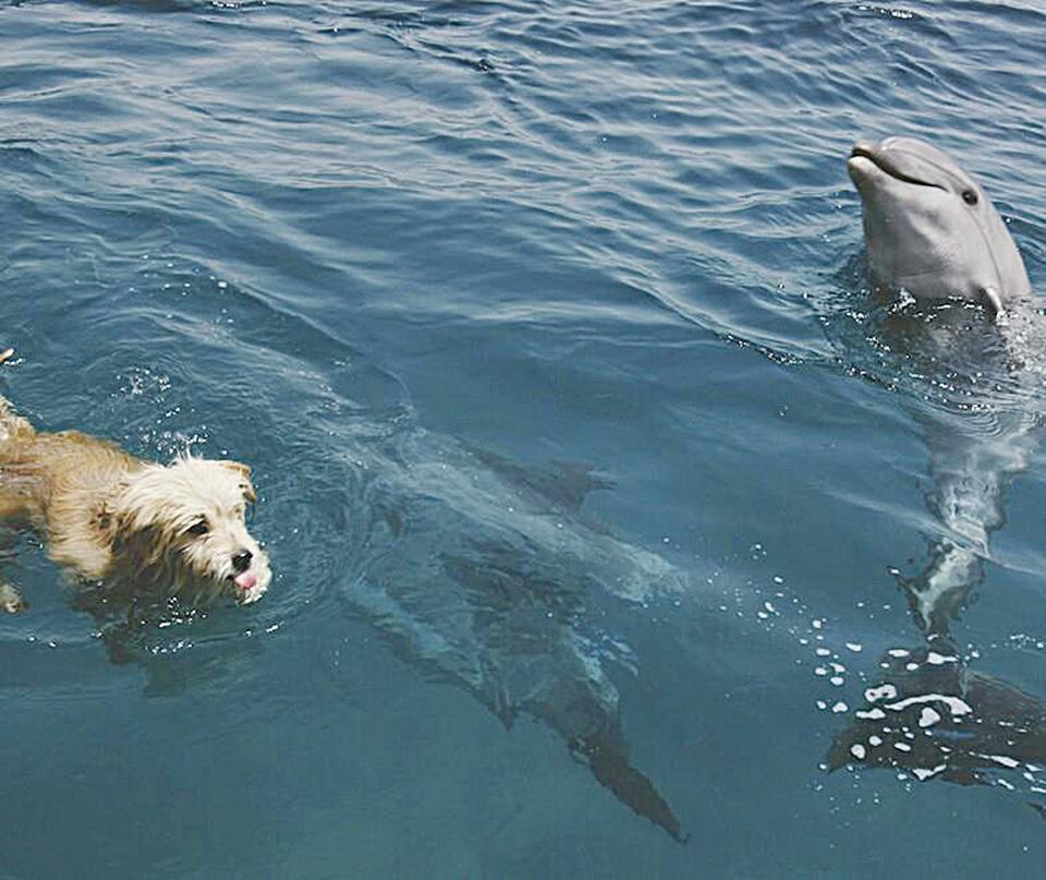 (SOS Dolphins Facebook)