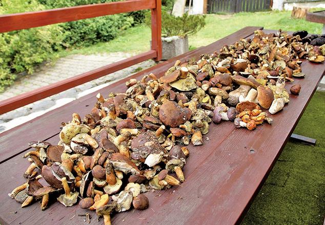 在中國西北部,山西省的首府西安,蘑菇供應商甚至使用「強化學添加劑」漂白蘑菇,讓它們看起來很新鮮。(Illustration – Pixabay | ivabalk)