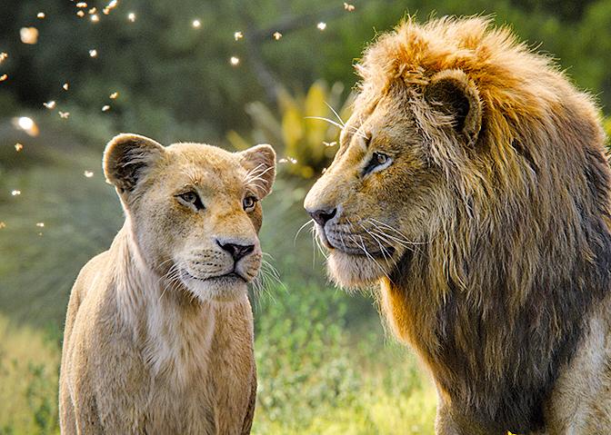 辛巴與娜娜的愛情,是《獅子王》的重要故事線。